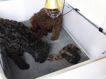 6 pups geboren!